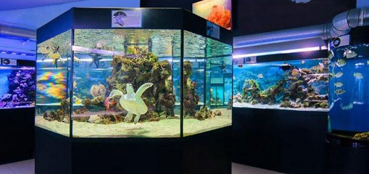Одесский океанариум Немо